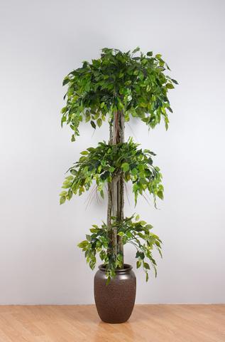 Штамбовое дерево (без горшка).