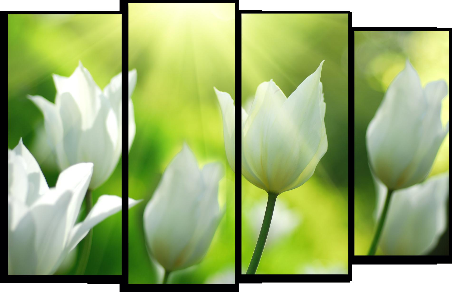 """Цветы Модульная картина """"Белые тюльпаны"""" М767.png"""