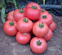 Донателло F1 семена томата индетерминантного (Vilmorin / Вильморин)