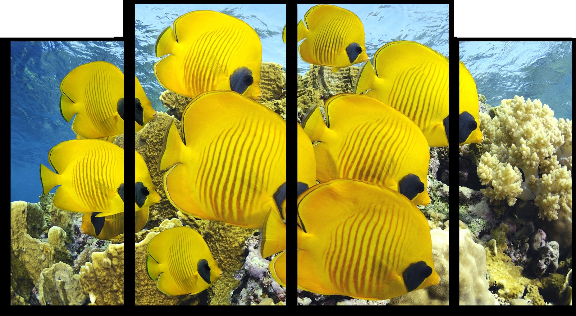 """Животные Модульная картина """"Желтые рыбки"""" М563.png"""
