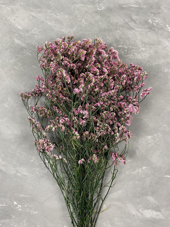 Лимониум стабилизированный розовый