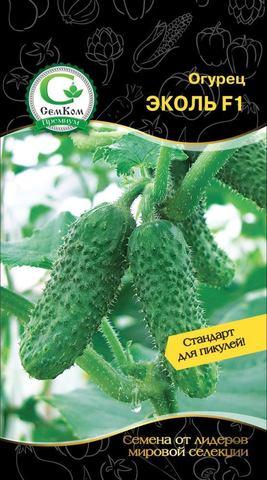 Семена Огурец Эколь F1 (Syngenta)