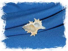 Биплекс перка (Gyrineum perca)