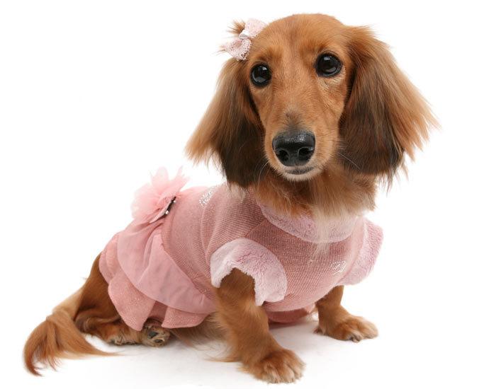 теплое платье для маленьких собак