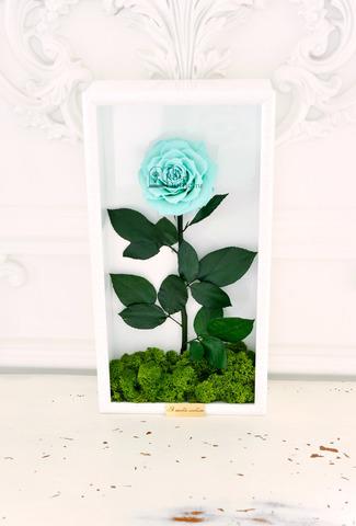 Стабилизированная Роза в Картине Premium Оптом Размер*Бутон (44х22х8см*11см) Цвет тиффани