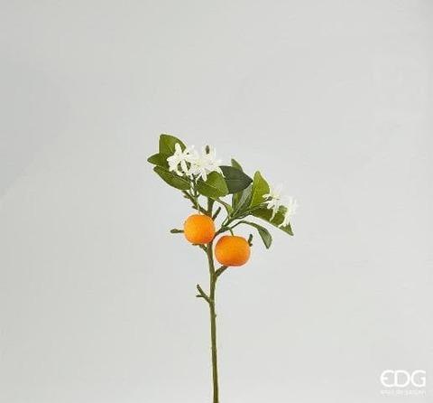 Ветка цветущего мандарина