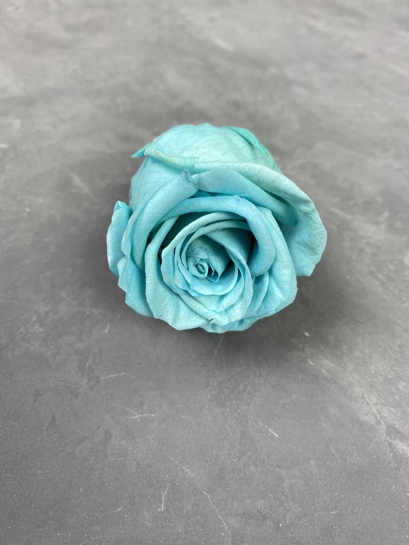 Роза классическая бирюзовая d=4-5 см