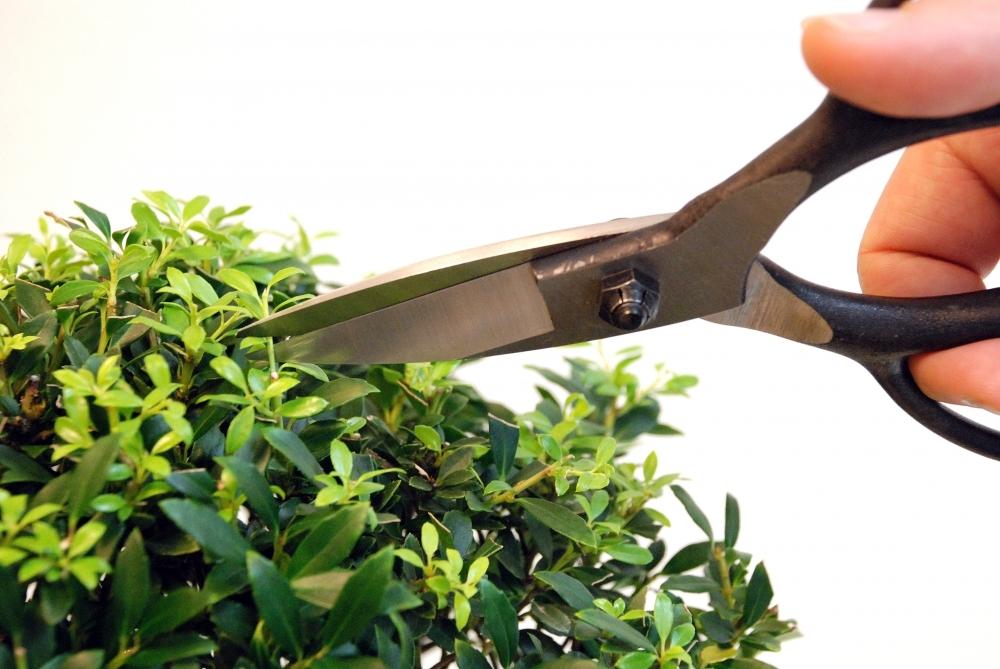 Ножницы для бонсай Okatsune 201, 210/55 мм