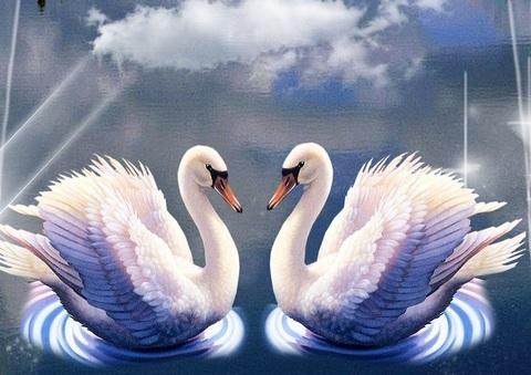 Алмазная Мозаика 40x50 Два белых лебедя под облаком (арт. SGL70032 )