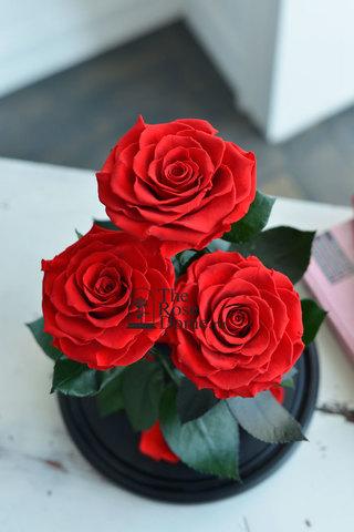 Роза Трио Premium Оптом Выс*Диам*Бутон (32*22*3х12см) Цвет красная