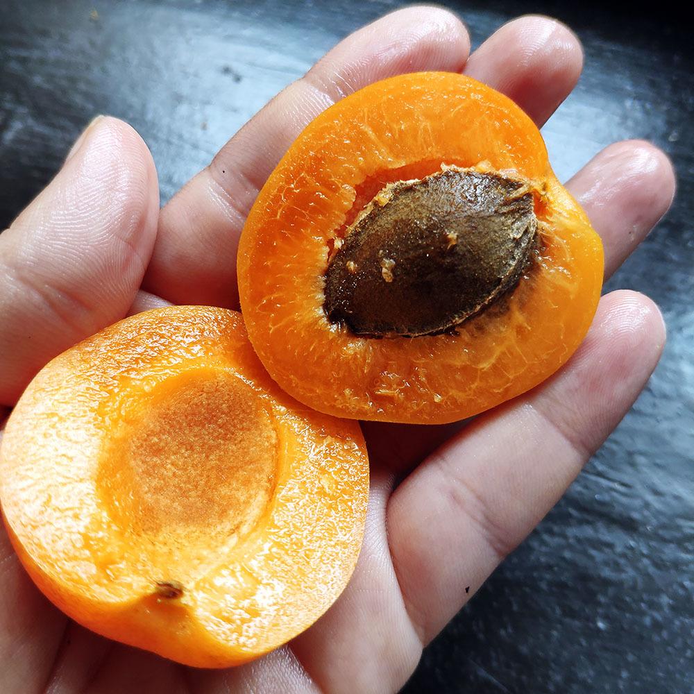 Фотография Нектакосы (абрикос + нектарин) свежие / 1 кг купить в магазине Афлора