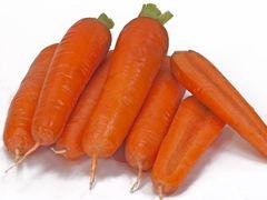 Тангерина F1 семена моркови курода/шантане (Takii / Таки)