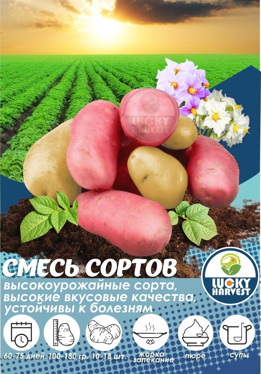 Семенной картофель   СМЕСЬ СОРТОВ   ТМ LUCKY HARVEST (Украина)