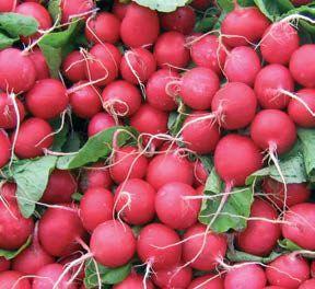 Редис Дабел F1 семена редиса (Nunhems / Нюнемс) ДАБЕЛ_F1_семена_овощей_оптом.jpg