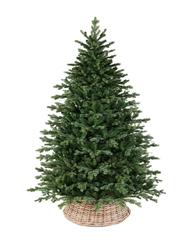 Triumph tree ель Шервуд Премиум 2,15 м зеленая