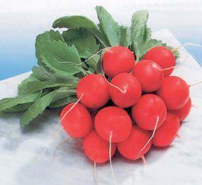 Редис Сора семена редиса (Nunhems / Нюнемс) СОРА_семена_овощей_оптом.jpg