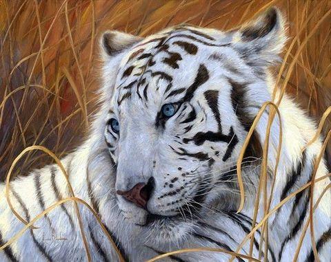 Алмазная Мозаика 30x40 Белый тигр в траве (арт. GB72756)
