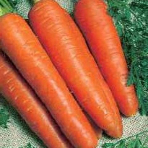 Нантская Тито семена моркови нантской (Hazera / Хазера) Тито_семена_овощей_оптом.jpg