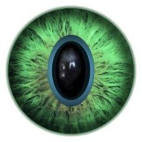 Глаза для игрушек, 12 мм
