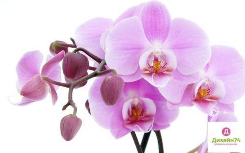 Орхидея - отдушка косметическая, 10 мл.