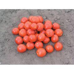 Дональд F1 семена томата процессингового (Nunhems / Нюнемс)