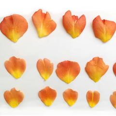 Каттеры Парковые розы