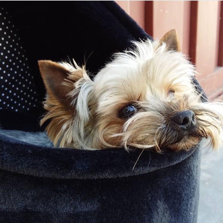 1733 - Автокресло для собак