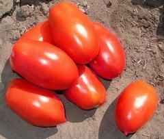 Инкас F1 семена томата процессингового (Nunhems / Нюнемс)