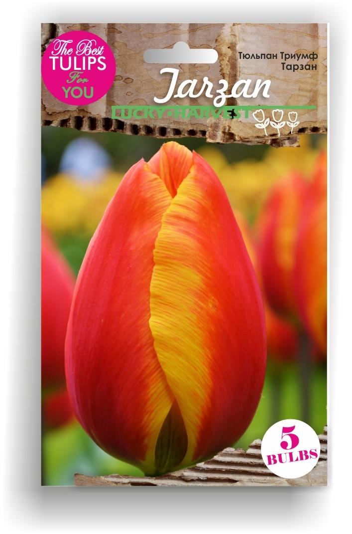 Тюльпан Триумф Tarzan (Тарзан) Украина 5 шт