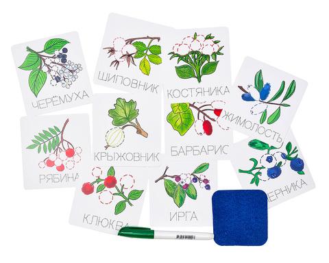 Карточки прописи пиши-стирай Ягоды, Smile Decor Ф902