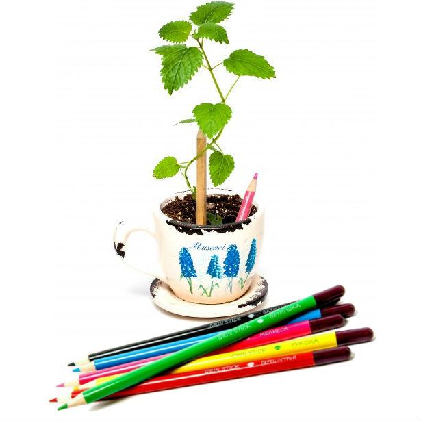 """Оригинальные подарки Растущие карандаши """"Пряные травы"""" (набор 6 шт., цветные) 522437d72d0a6b4cf774072e90f02666.jpg"""