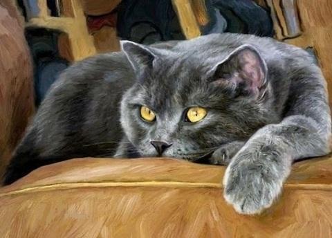Алмазная Мозаика 40x50 Кот отдыхает на диване(арт. GA74226 )