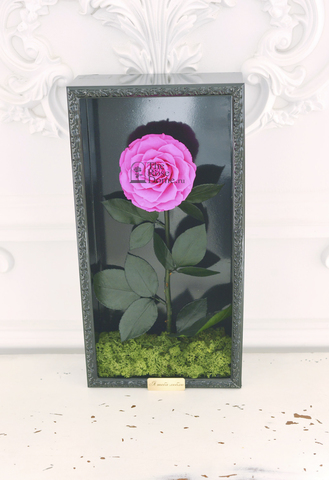 Стабилизированная роза кинг в картине ярко-розовая
