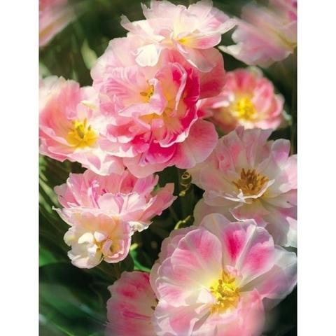 Соцветие 196x260 см