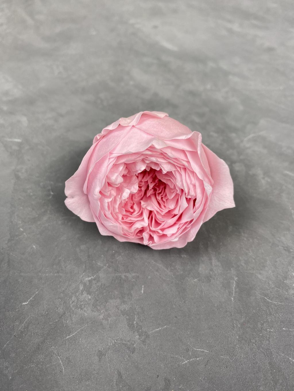 Роза пионовидная розовая d=4,5 см
