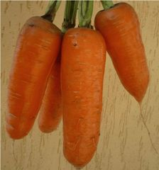 Шантиклер F1 семена моркови курода/шантане (Sakata / Саката)
