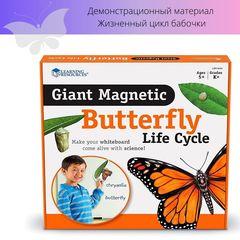 Набор магнитов Жизненный цикл бабочки Learning Resources