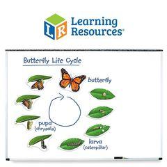 Игра для класса Жизненный цикл бабочки Learning Resources