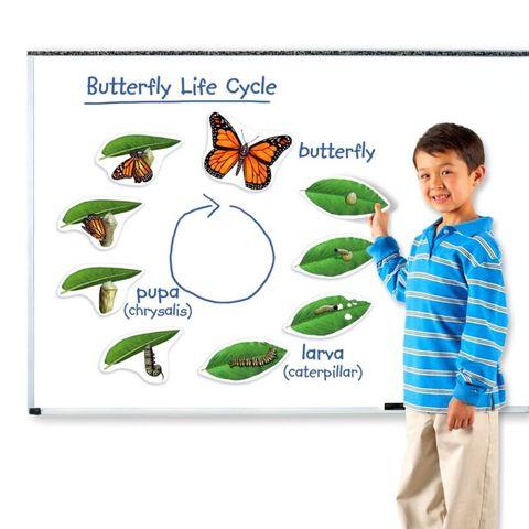 LER6043 Развивающая игрушка Жизненный цикл бабочки (магнитный) Learning Resources