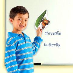Демонстрационный материал Жизненный цикл бабочки Learning Resources