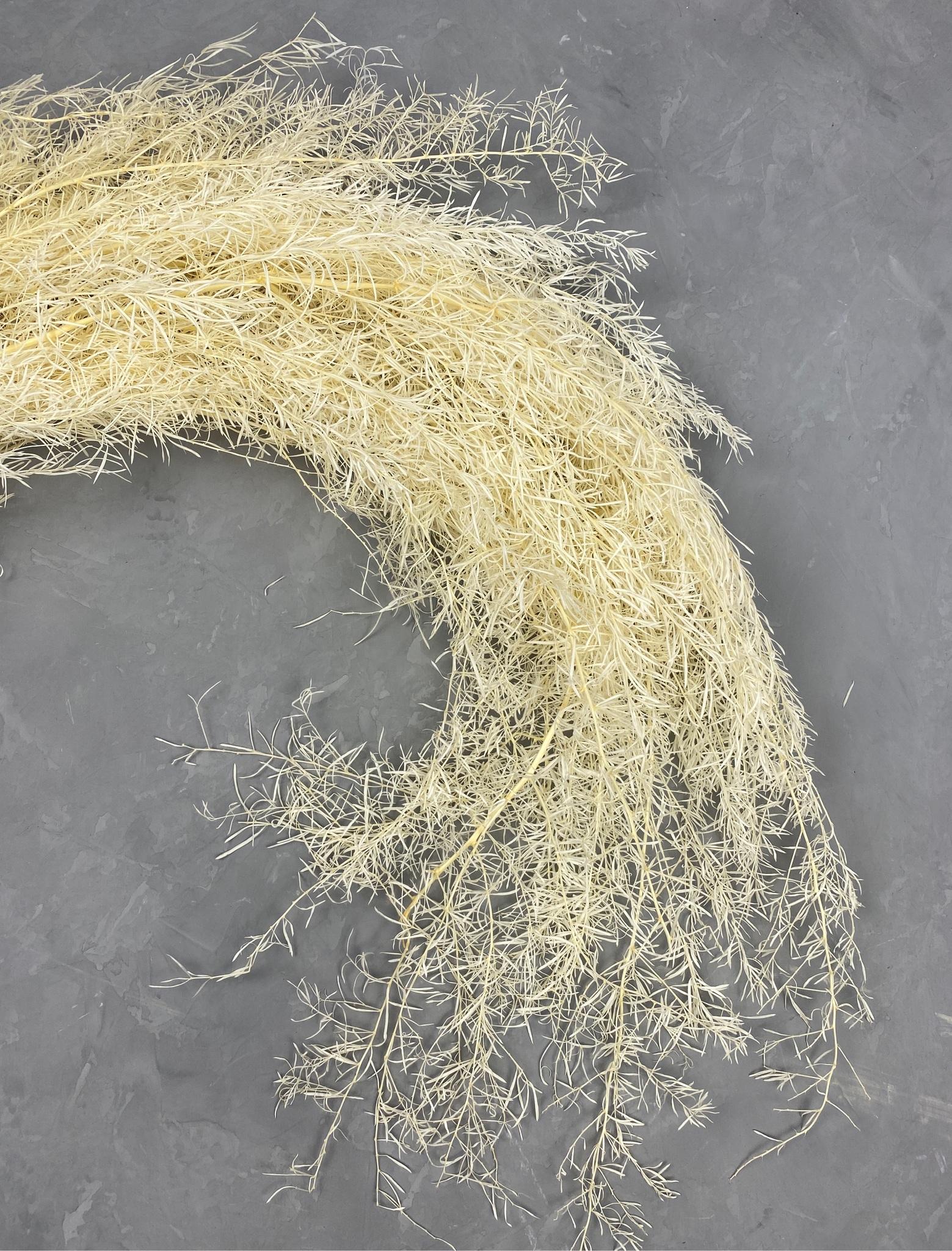 Аспарагус стабилизированный шпренгера белый