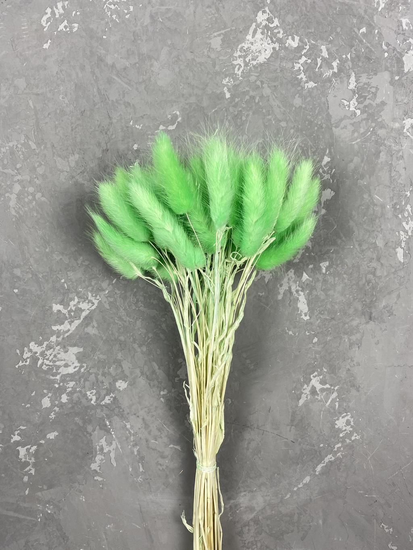 Лагурус зеленый маленький пучок