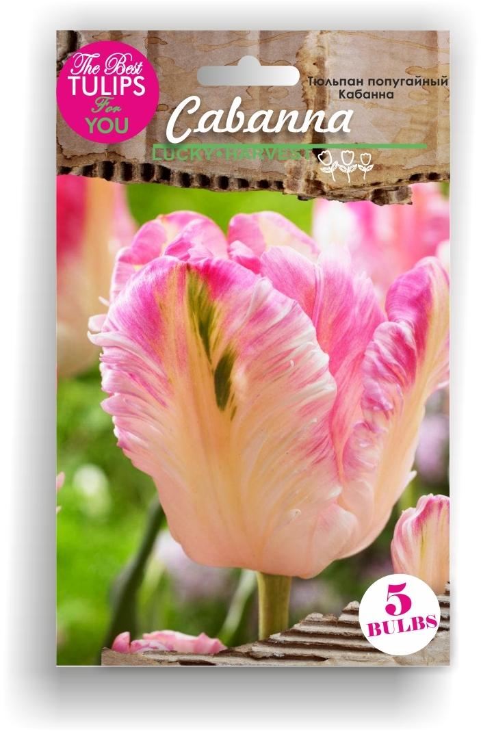 Тюльпан Попугайный Cabanna (Кабанна) Украина 5 шт