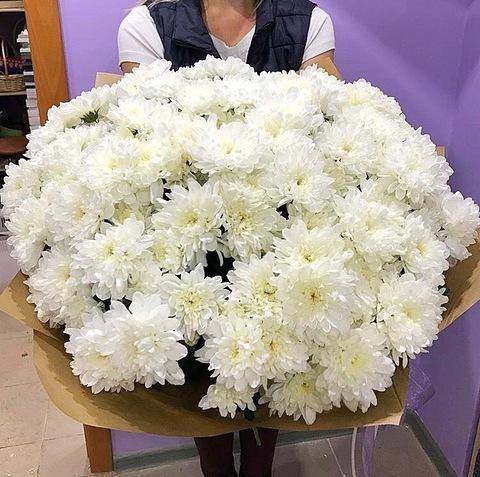 25 кустовых хризантем в оформлении #1760