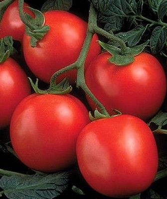 Томат Перфектпил F1 семена томата детерминантного (Seminis / Семинис) ПЕРФЕКТПИЛ_F1__Perfect_peel_F1__семена_овощей_оптом.jpg