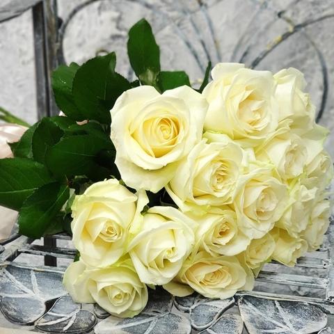 15 белых роз 50 см, 60 см, 70 см #41726