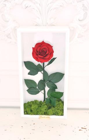 Стабилизированная Роза в Картине Premium Оптом Размер*Бутон (44х22х8см*11см) Цвет бордовая