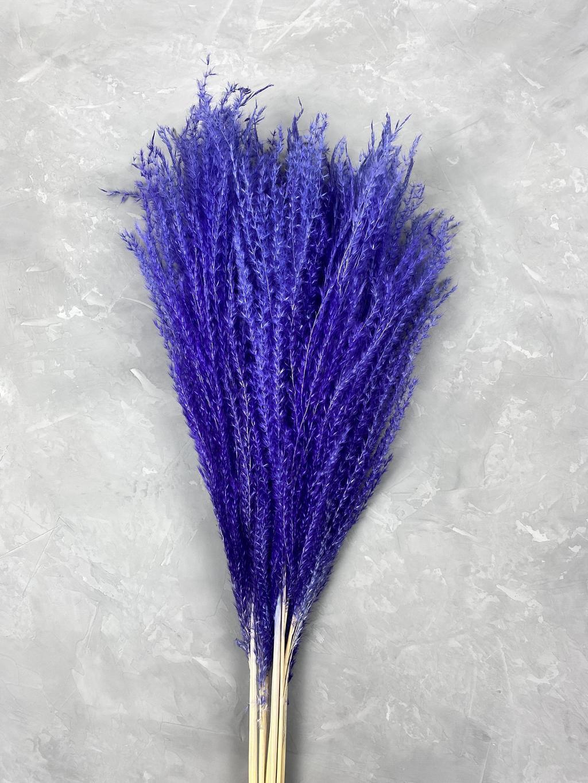 Мискантус светло-фиолетовый