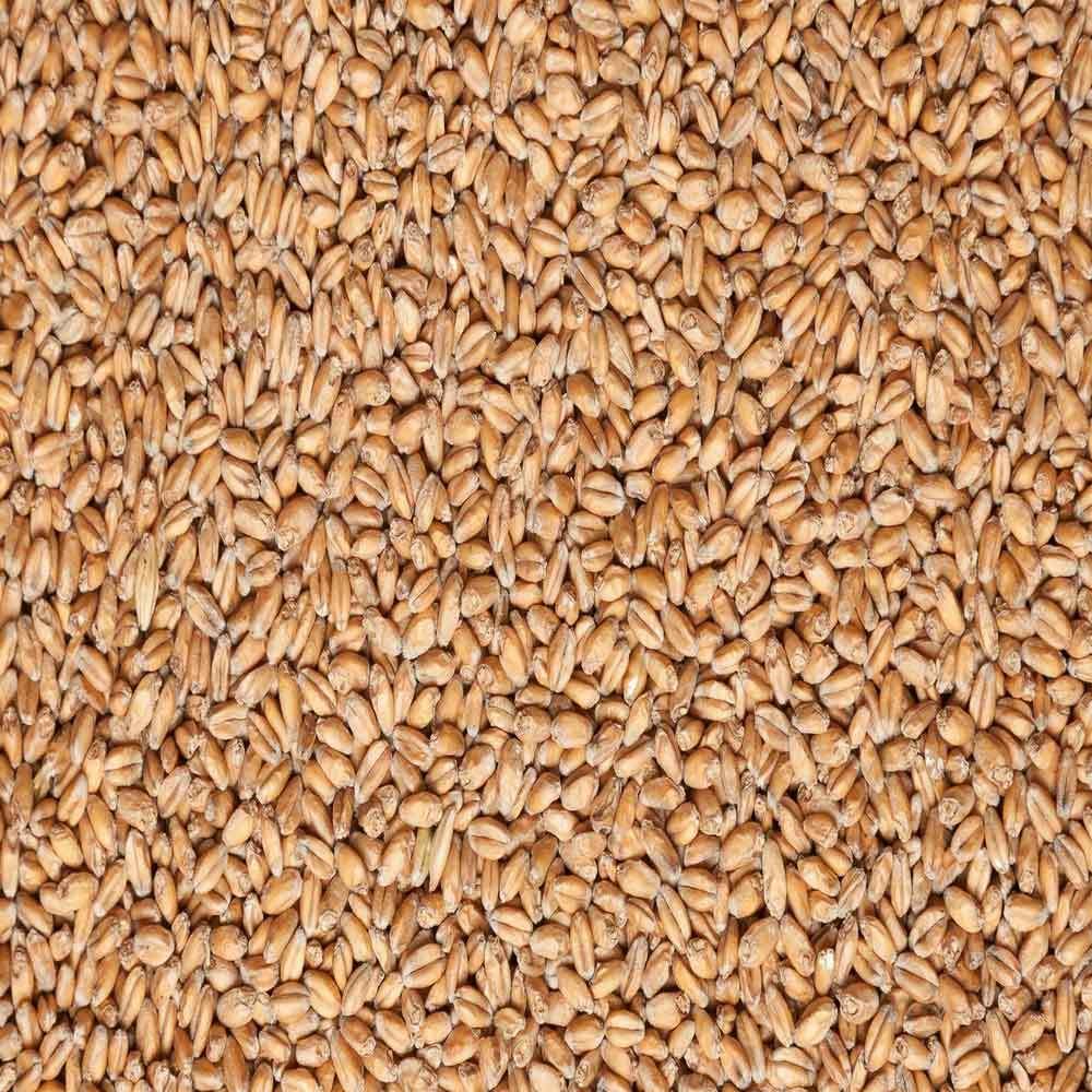Пшеница в интернет-магазине Комбикормов.ру