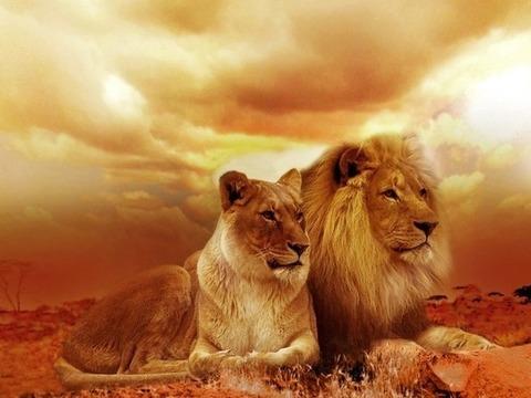 Алмазная Мозаика 40x50 Лев и львица остматривают владения